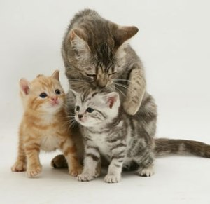 cats-and-kittens-playing1